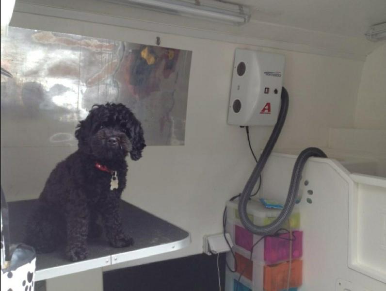 Dog Grooming No Mess No Stress